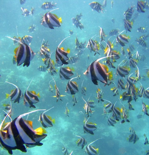 Maldive Fishes
